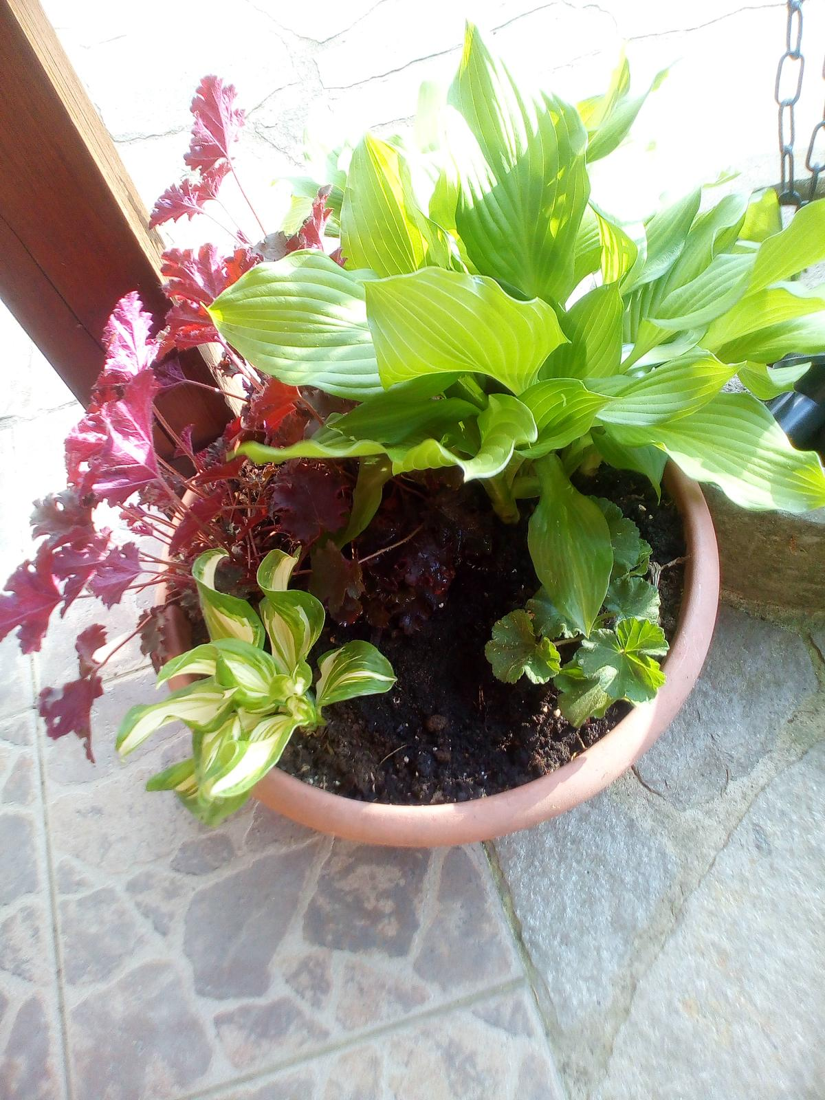 Moje květena.. - Obrázek č. 86