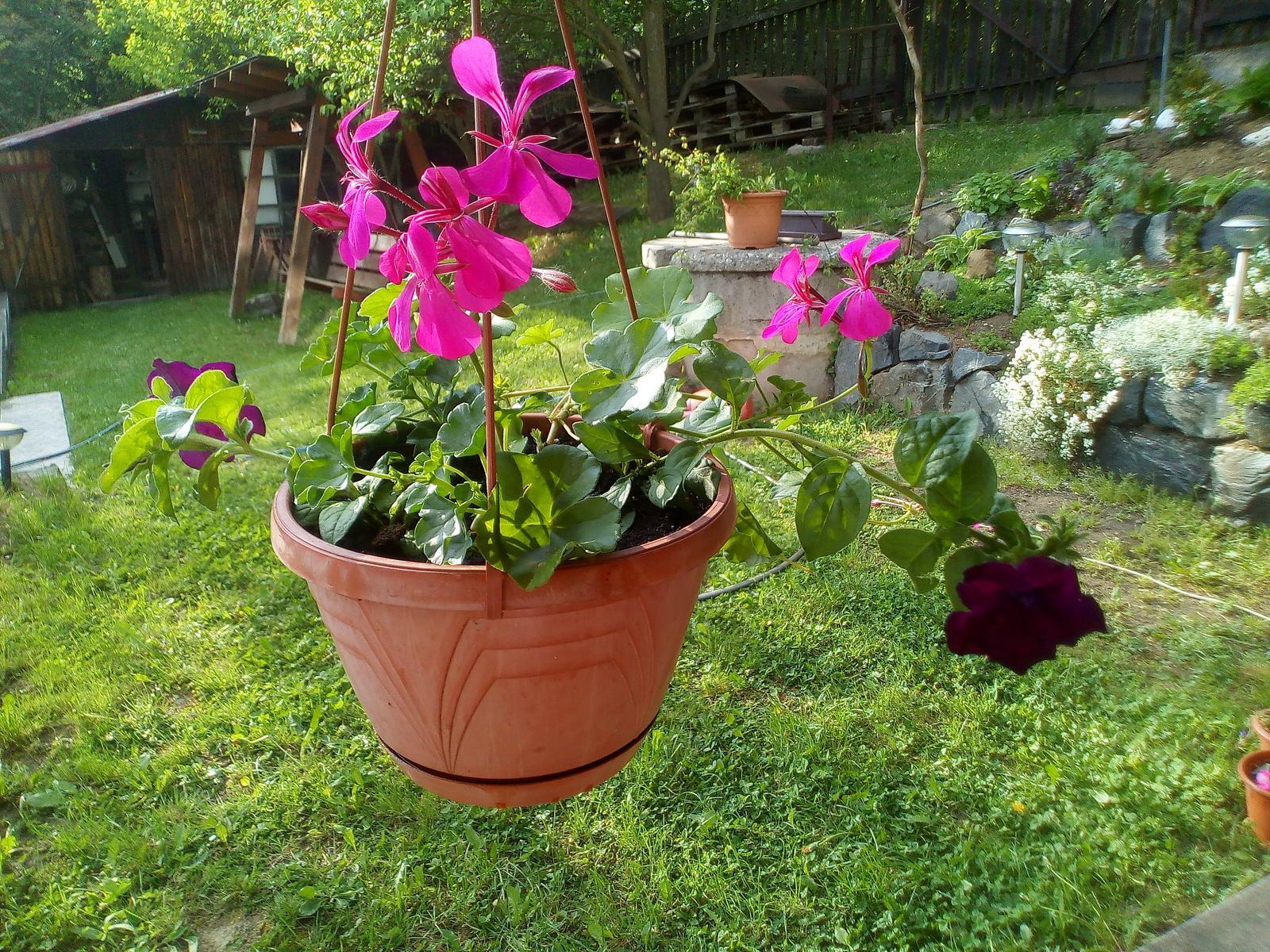 Moje květena.. - Obrázek č. 88