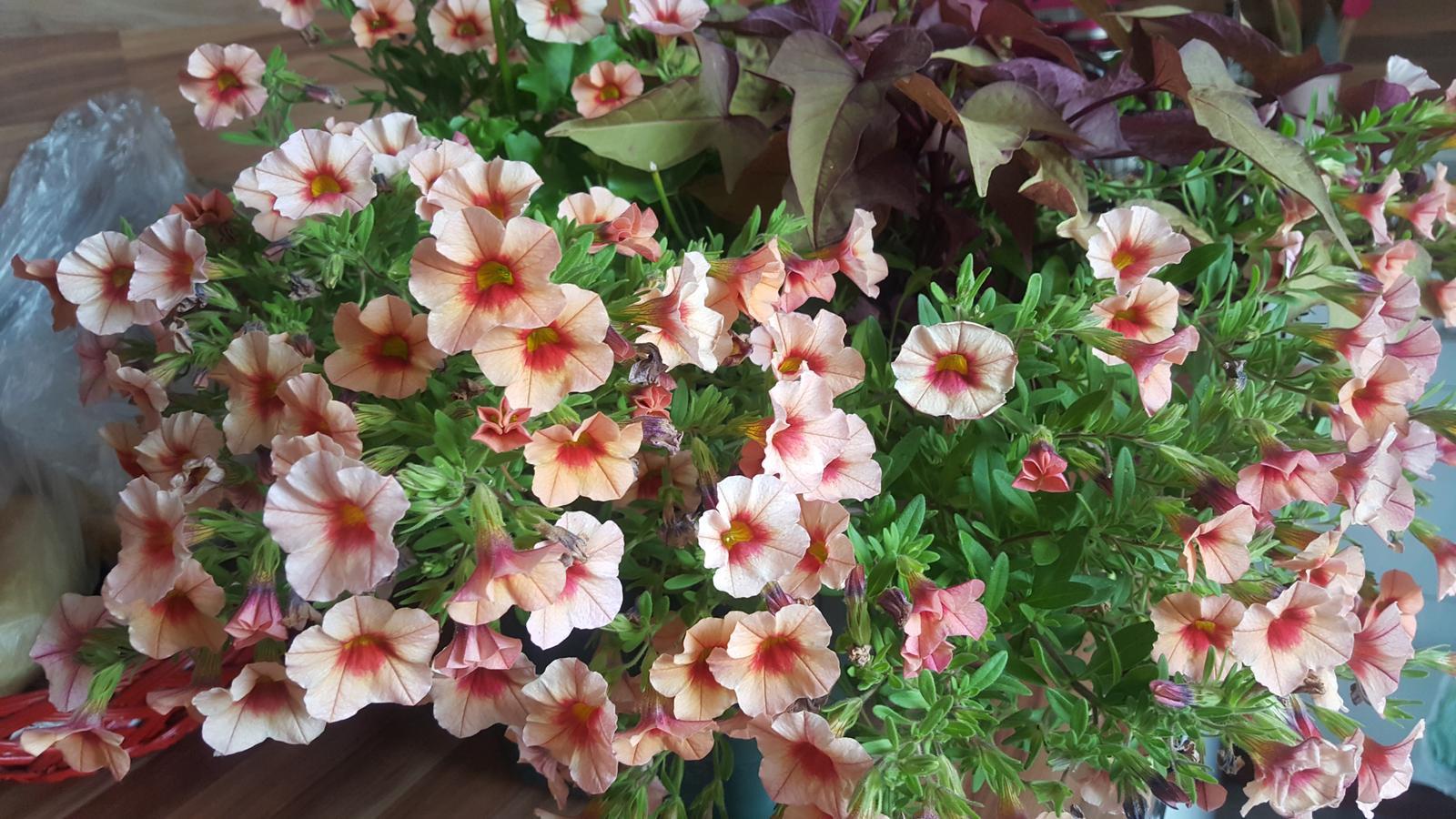 Moje květena.. - Obrázek č. 102