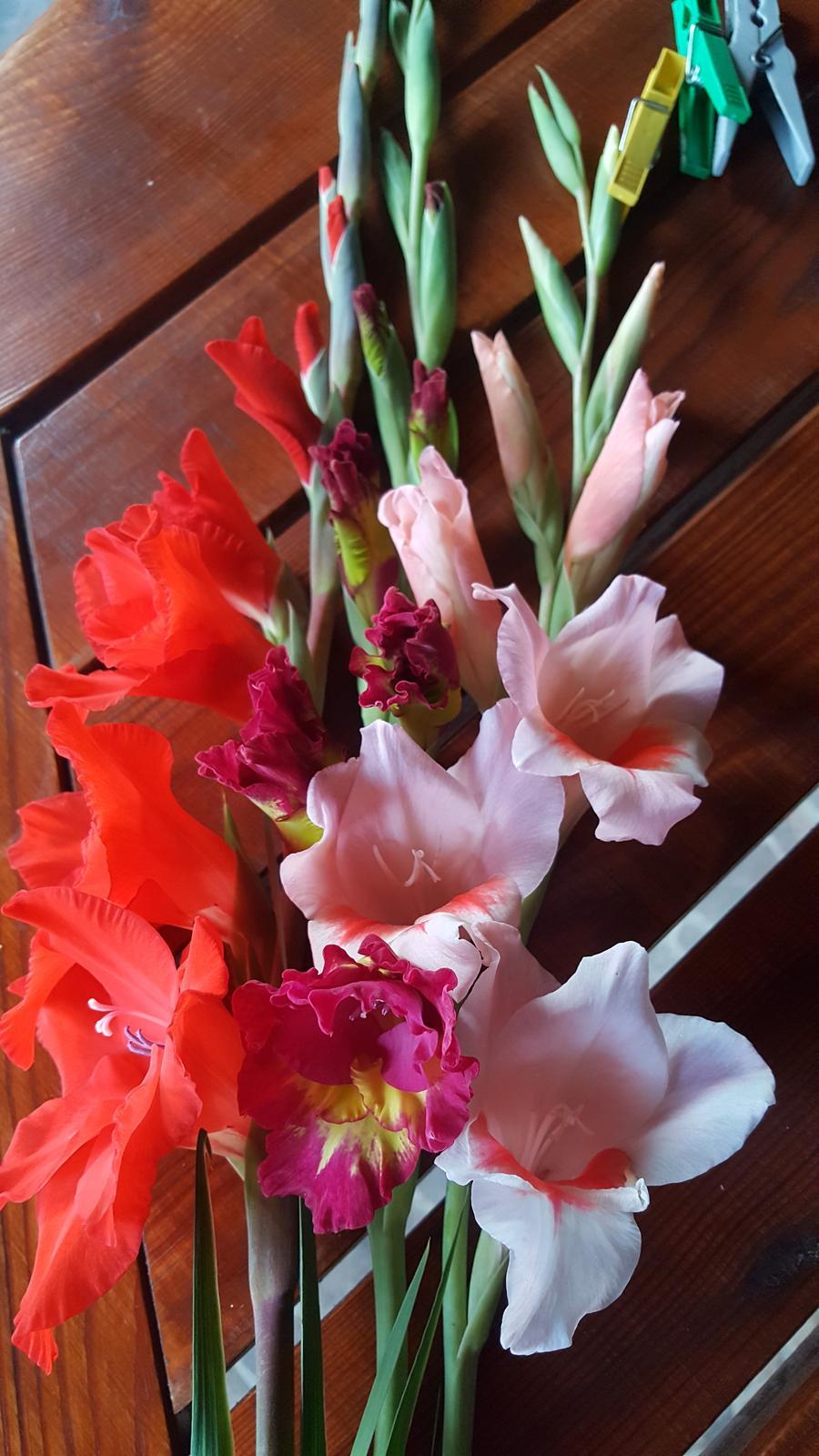 Moje květena.. - Obrázek č. 324