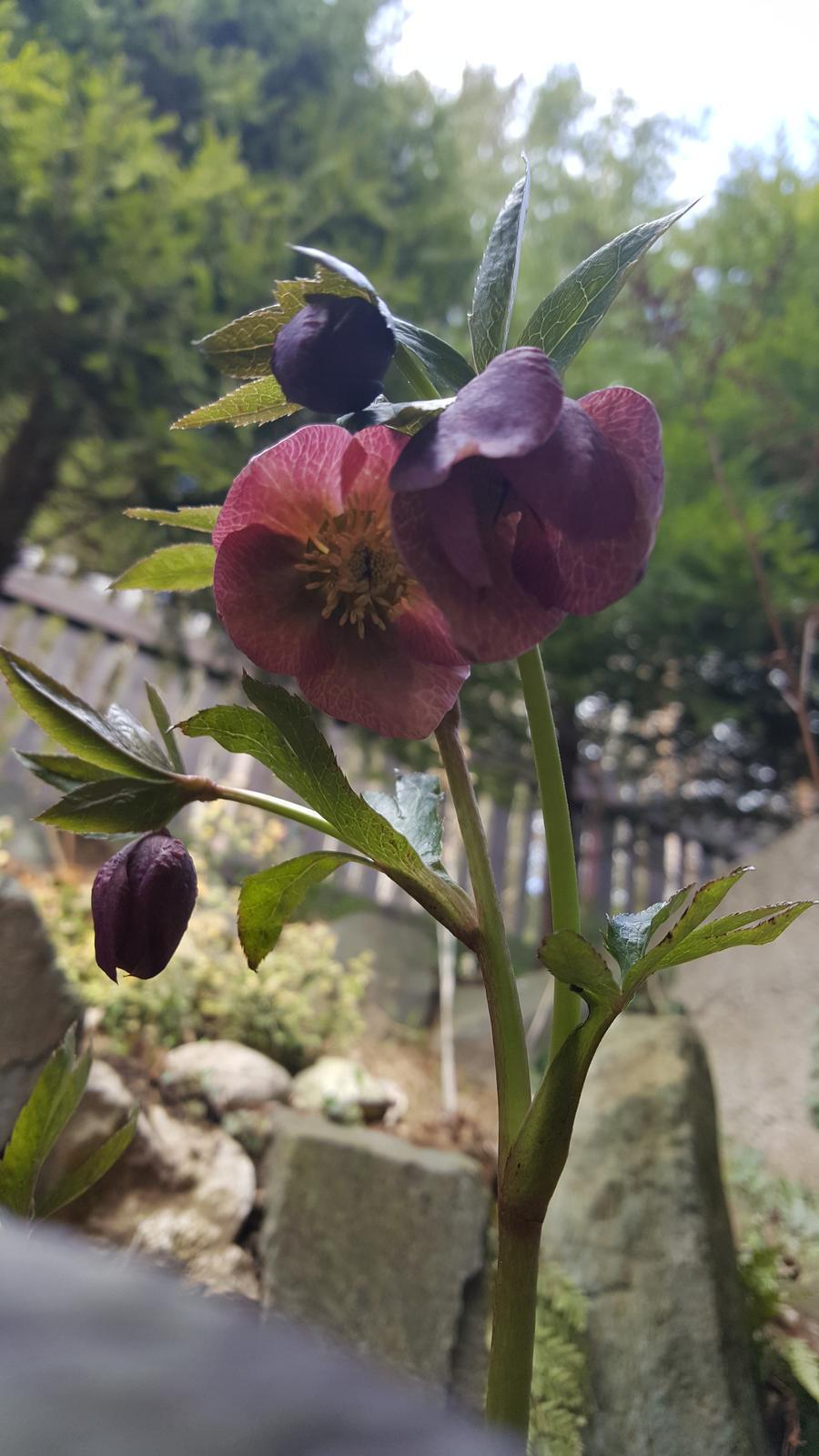 Moje květena.. - Obrázek č. 341