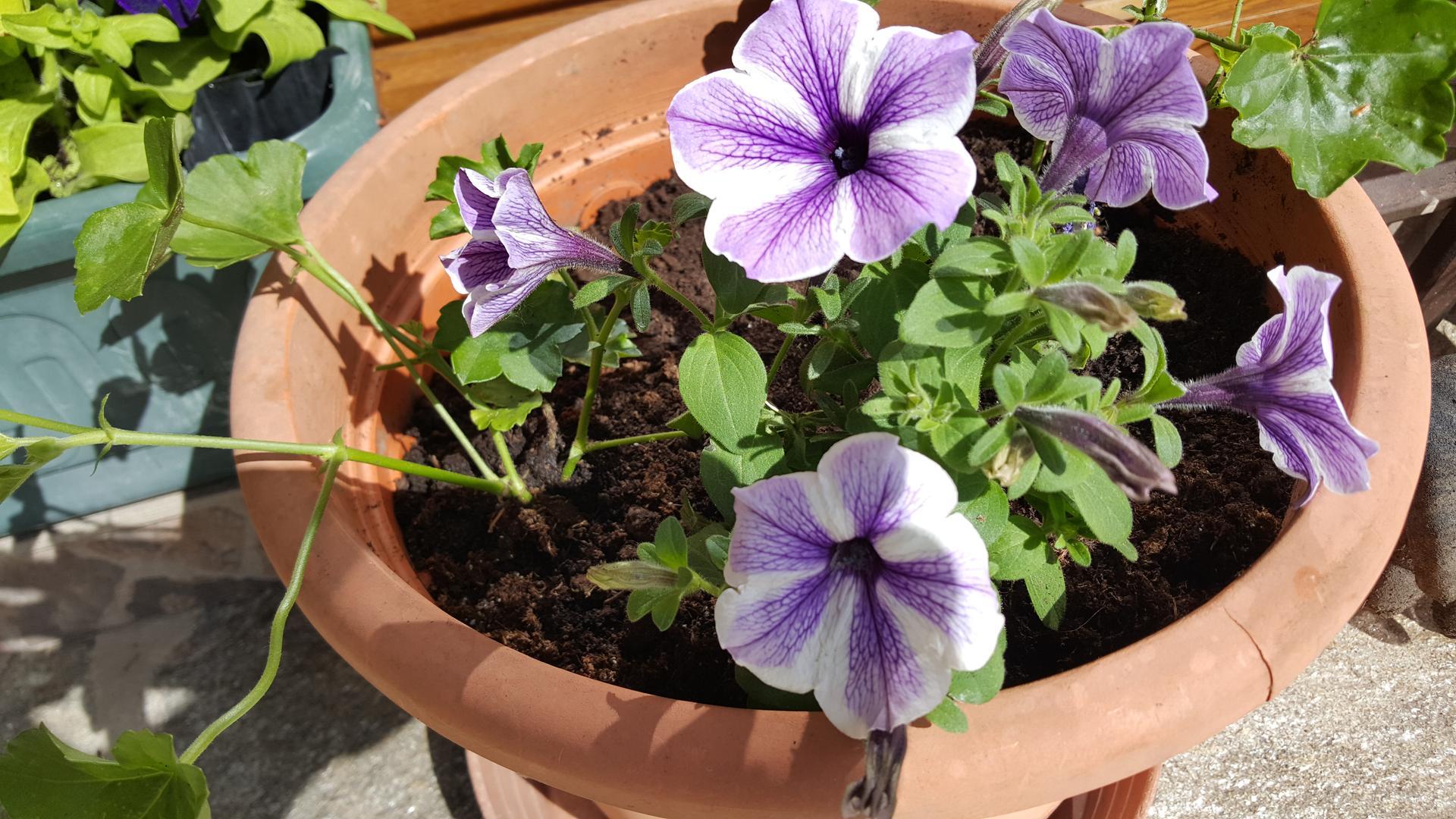 Moje květena.. - Obrázek č. 349
