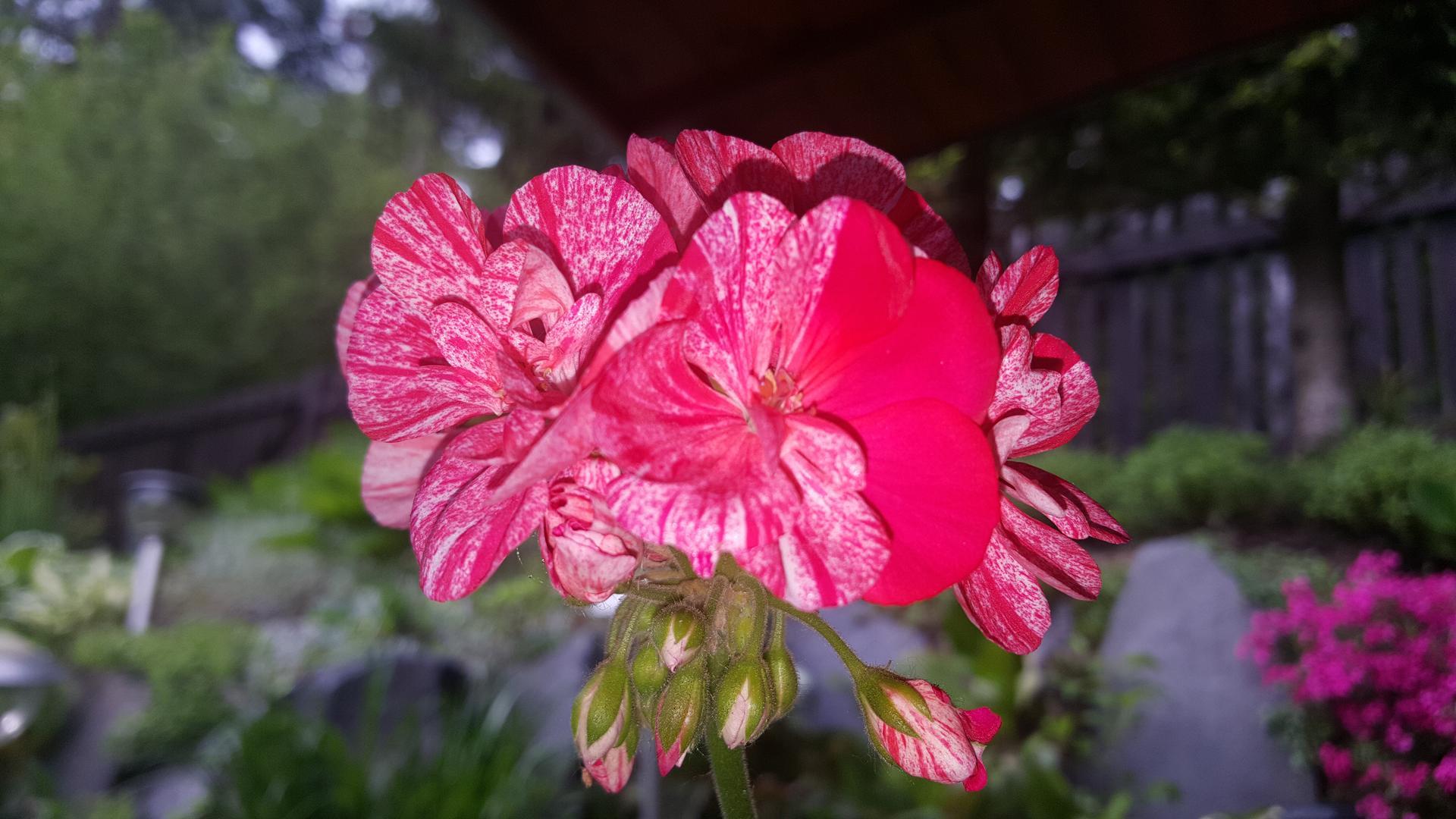 Moje květena.. - Obrázek č. 350