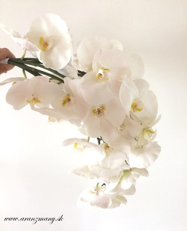 Red&white - phalaenopsis