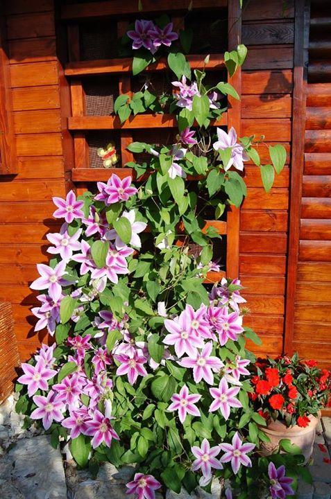Niečo zo záhrady... - Obrázok č. 5