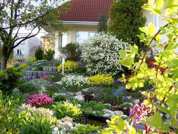 Niečo zo záhrady... - Obrázok č. 8
