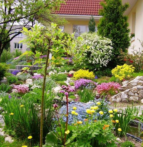 Niečo zo záhrady... - Obrázok č. 7