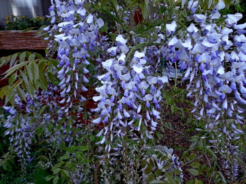 Niečo zo záhrady... - Obrázok č. 14