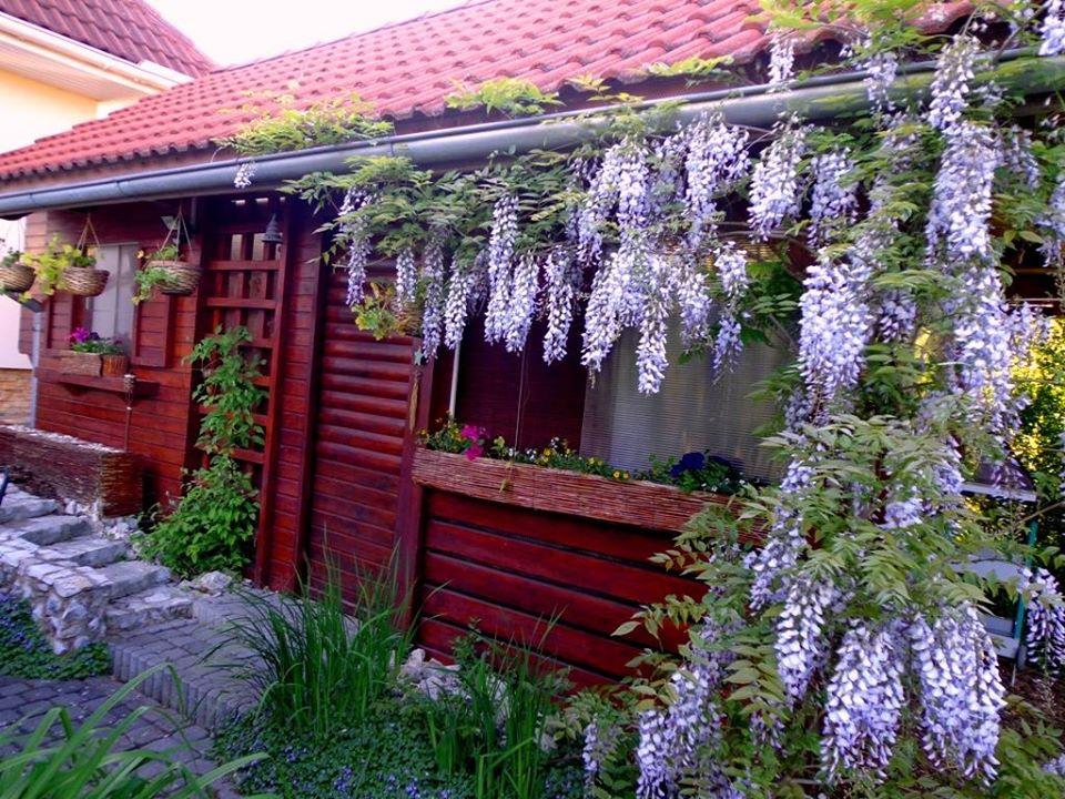 Niečo zo záhrady... - Obrázok č. 13
