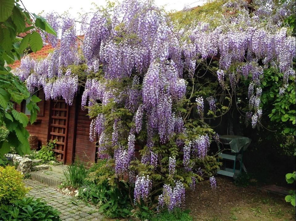 Niečo zo záhrady... - Obrázok č. 16