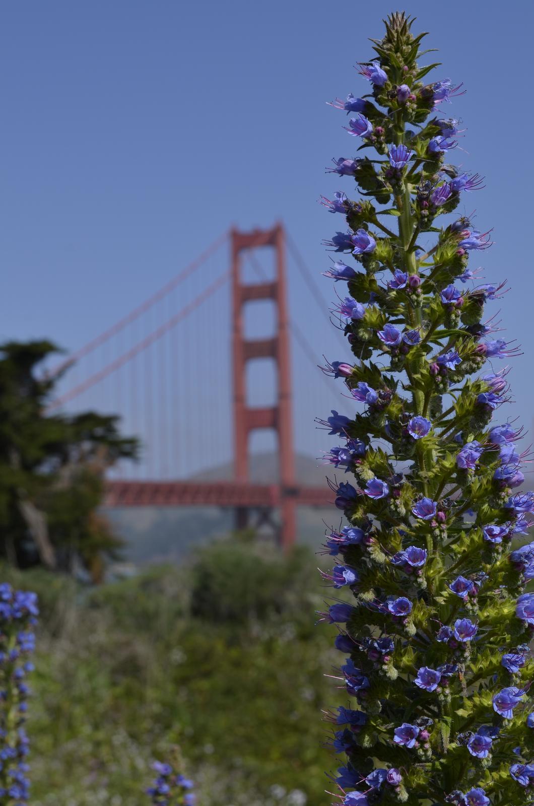 """If you can dream it, you can do it."" - Golden Gate predstavovať isto netreba :)"