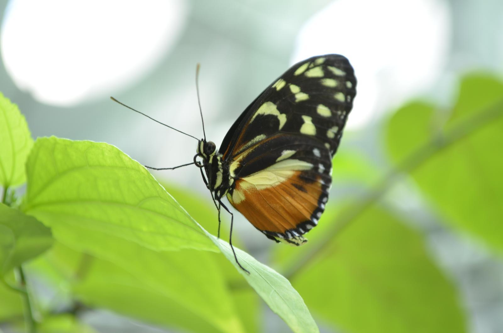 """""""If you can dream it, you can do it."""" - motýlov tam bolo kopec! pri nastupovaní do výťahu bolo upozornenie, aby sme sa """"oprášili"""" od motýlov :D aby sme ich nevzali dole do akvária, tam by sa im asi nepáčilo :D"""