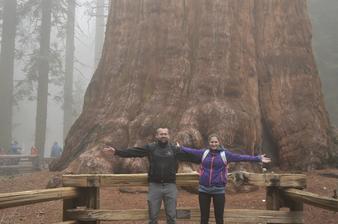 General sherman - objemovo najväčší strom na svete :)