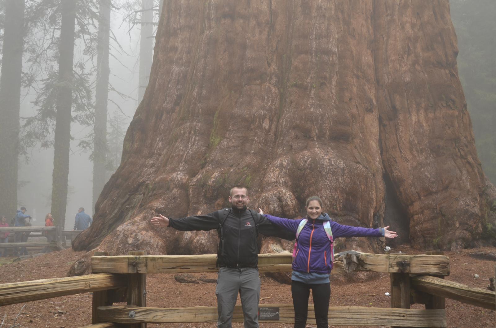 """""""If you can dream it, you can do it."""" - General sherman - objemovo najväčší strom na svete :)"""