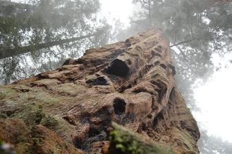 veľkosť tých stromov sa nedá hádam fotkami ani zachytiť, táto je ešte ako tak odpovedajúca, ale naživo tie stromy vyzerajú ako z inej planéty!