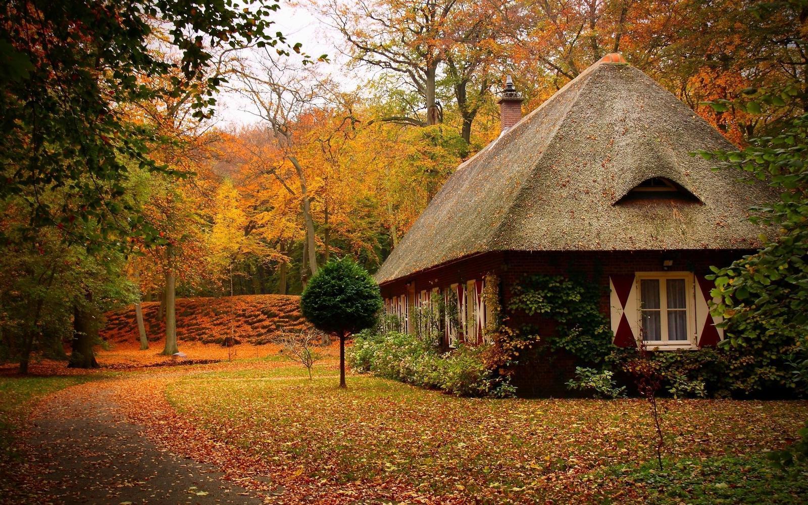 Bývanie v lese - Obrázok č. 3