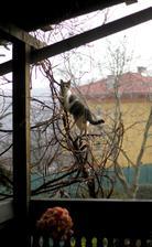 sýkorky je najlepšie vidieť zo strechy. Tvrdí Andrejka :)