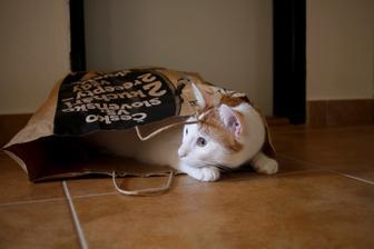 papierová taška z lidl je bezkonkurečná skrýša :)