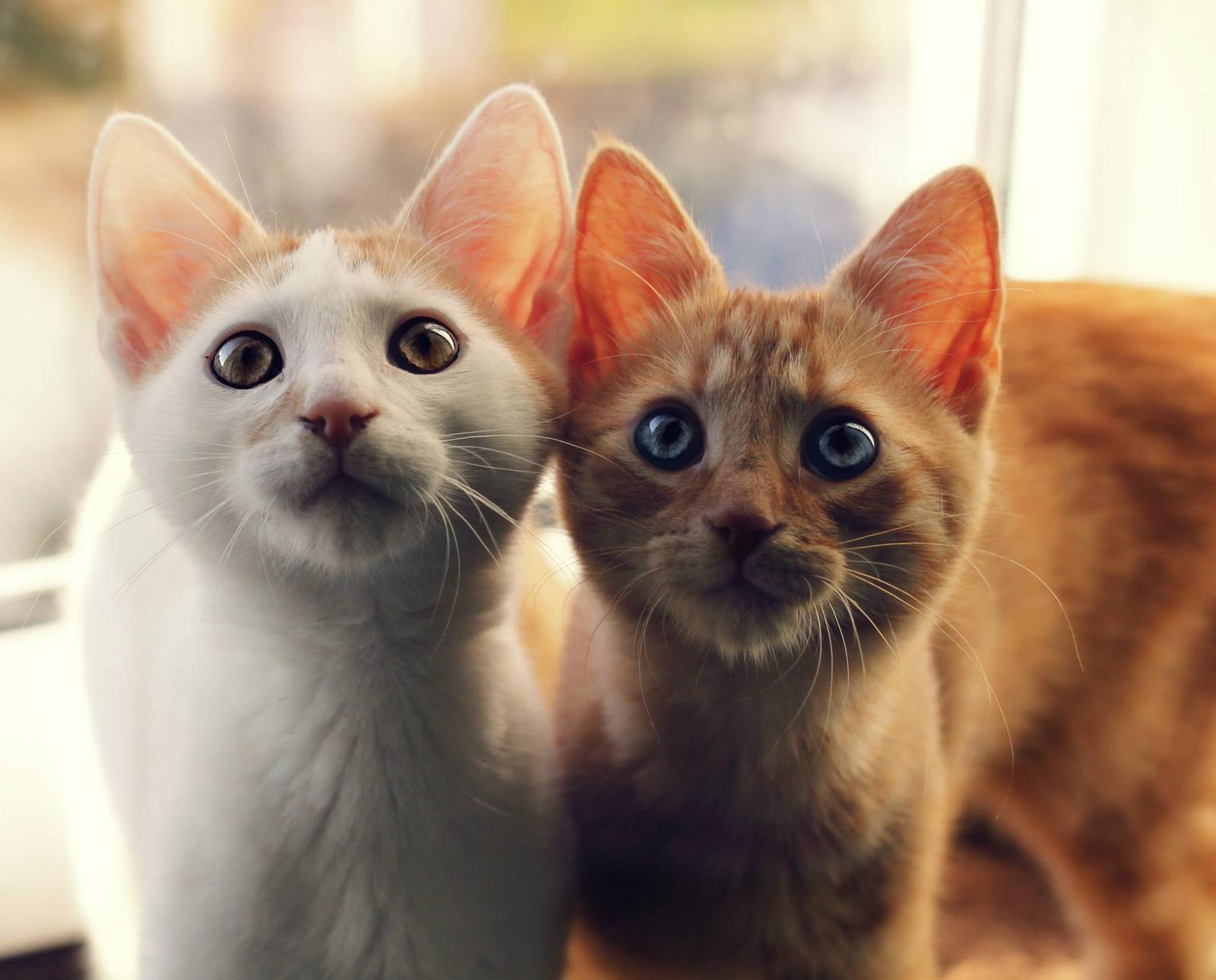 Cicoviny - mačkoviny - Fotka skupiny