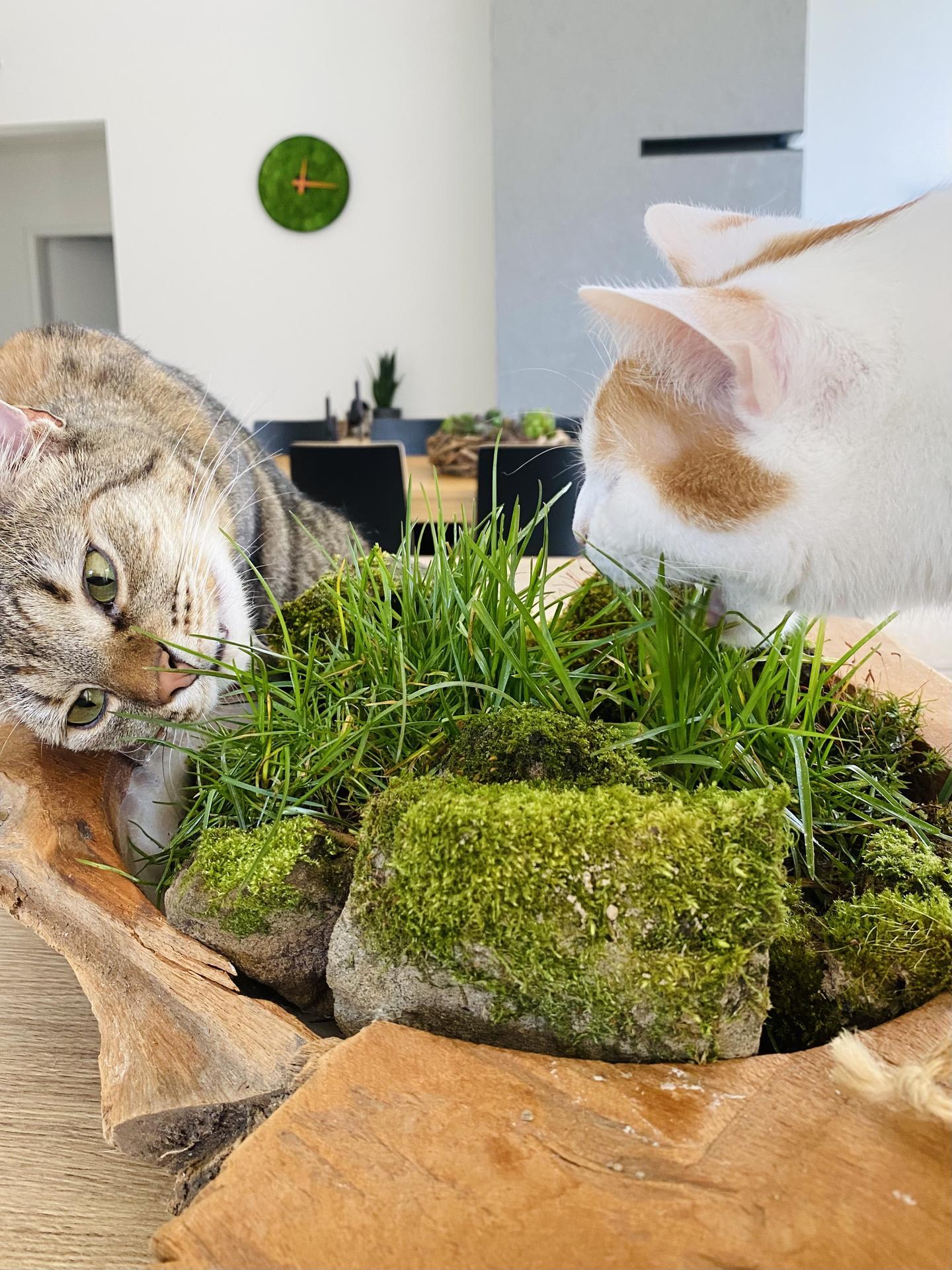 Catfriendly dekorácia - Obrázok č. 10