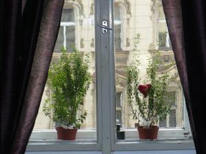 naše okno před svatbou - myrta