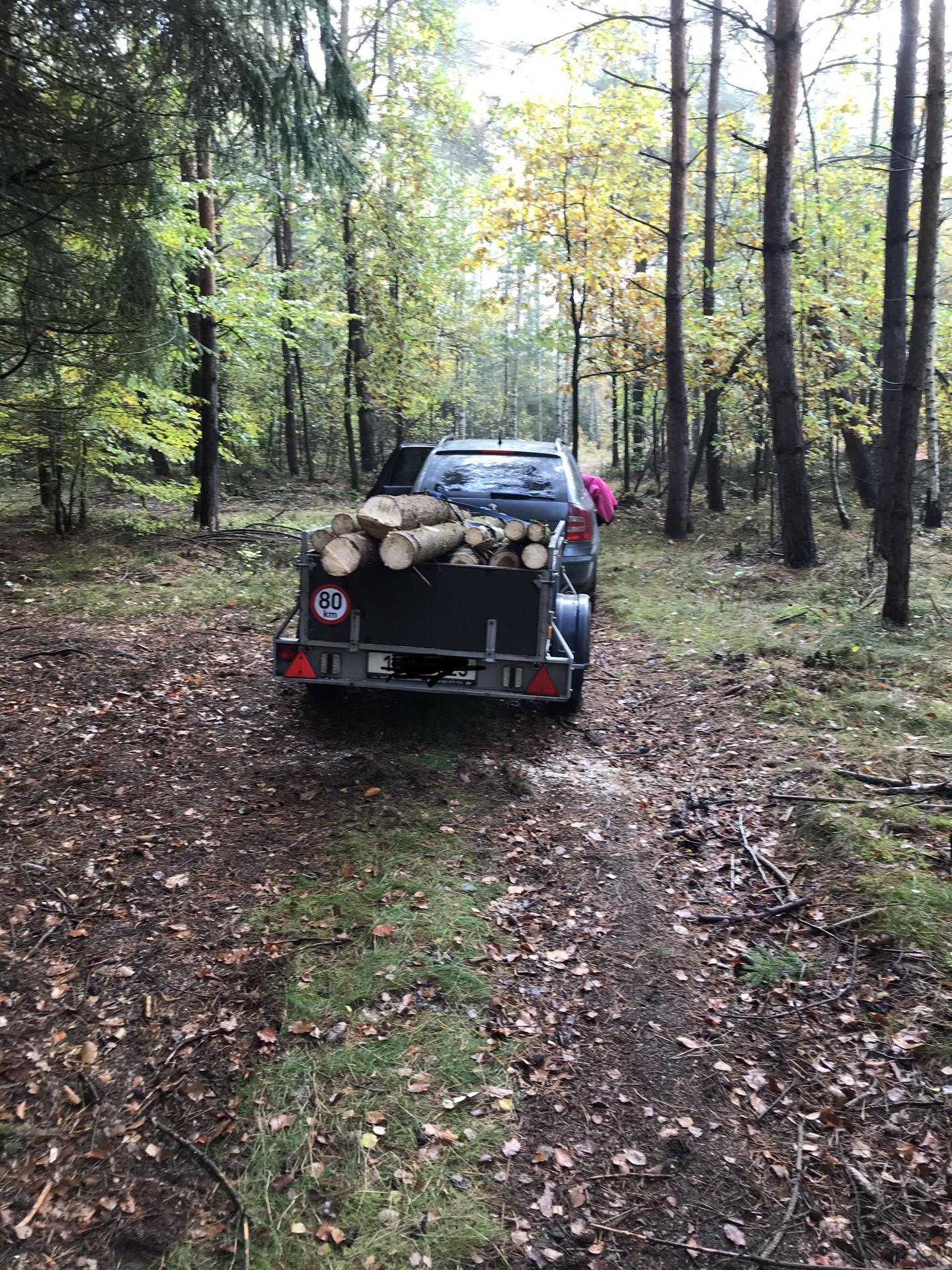 Náš Bungalov - Dneska jsme s dcerkou jeli do lesa na dřevo pro provizorní sloupky na oplocení pozemku lesnickým pletivem.