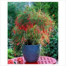 zajímavá rostlina