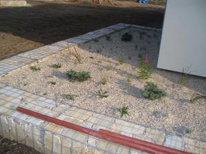 Rostlinky jeste male, z velkych jsme museli ustoupit, cenove se to nedalo a za rok to bud jine :)