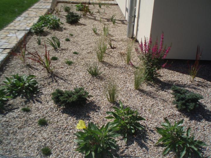 Zahrada - Kyticky taky pomalu kvetou a rostou :)