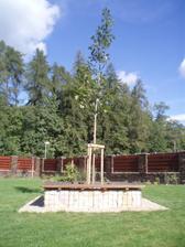 Novy strom v gabionu :)