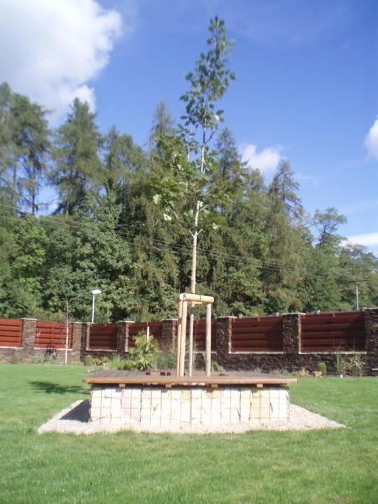 Zahrada - Novy strom v gabionu :)