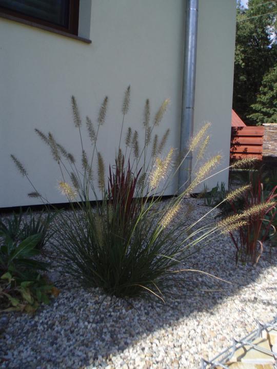 Zahrada - Vse pomalu roste :)