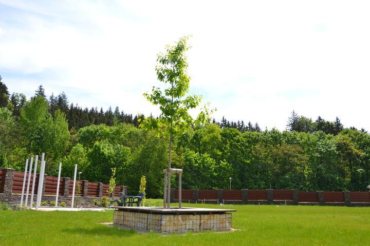 Zahrada - Obrázek č. 74