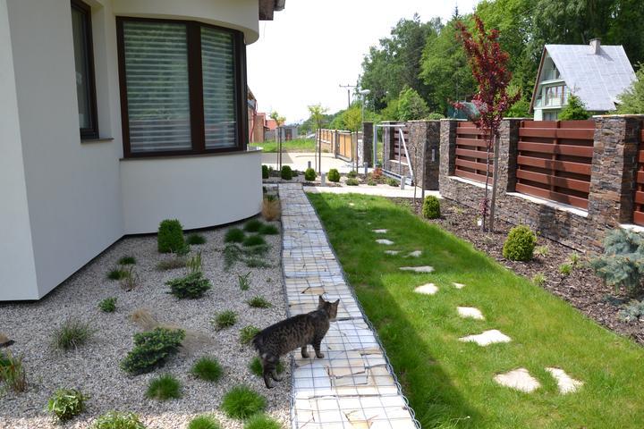 Zahrada - Kotek se chtel porad fotit, kdybych ho neodhanela, byl by na kazdem zaberu :)