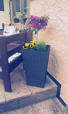 Zatím takhle,v květnu pak dám do květníku ještě milionbels a místo macešky bakopu :-)