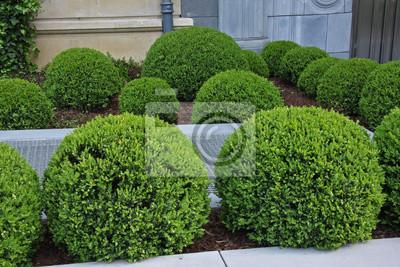 Plány pre našu budúcu záhradu - milujem krušpány, chcem ich tam mať stovky
