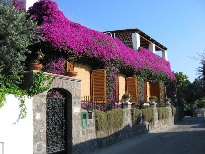 Plány pre našu budúcu záhradu - exotický sen - buganvilia