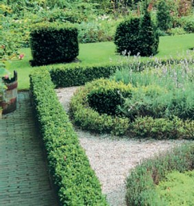 Plány pre našu budúcu záhradu - tvarovanie krušpánov