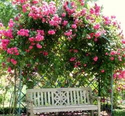 Plány pre našu budúcu záhradu - krásne popínavé ruže, nemám s nimi skúsenosti, páčia sa mi, ale mám obavy z ich pestovania, musia sa myslím striekať proti muškám..