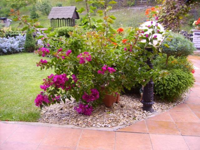 Plány pre našu budúcu záhradu - Obrázok č. 39