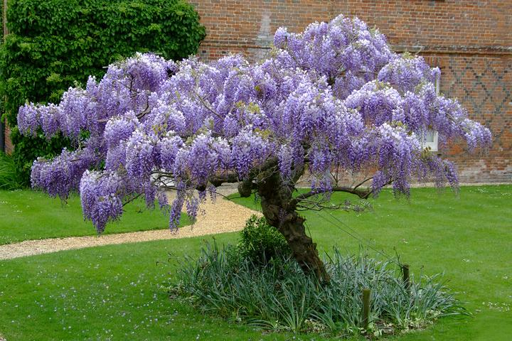 Plány pre našu budúcu záhradu - tak toto mať v záhrade - to by bola paráda - nejako sa o to pokúsim ju takto zostihať...uvidíme či sa mi to podarí