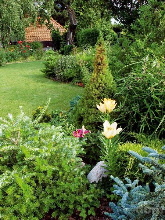 Plány pre našu budúcu záhradu - Obrázok č. 92