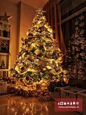 Presne takýto zlatý vianočný stromček si predstavujem do našej novej obývačky!  rozprávkový :-) aj náš bude pri krbe a okne, budeme mať leskú dlažbu tak sa to bude krásne odrážať od dlažby aj od okna-už aby to bolo!má len 1 chybu-vraj stojí 1200 Eur