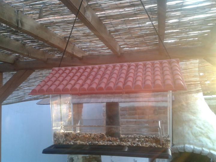 Náš starý domček - Filipko si kúpil budku pre sýkorky - len žiaden vtáčik zatial tiedo dobroty neobjavil...ako ich máme nálákať? malý chce pozerať na ne z kuchyne...