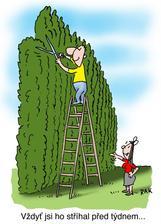 zázračne rastúci živý plot... :-)