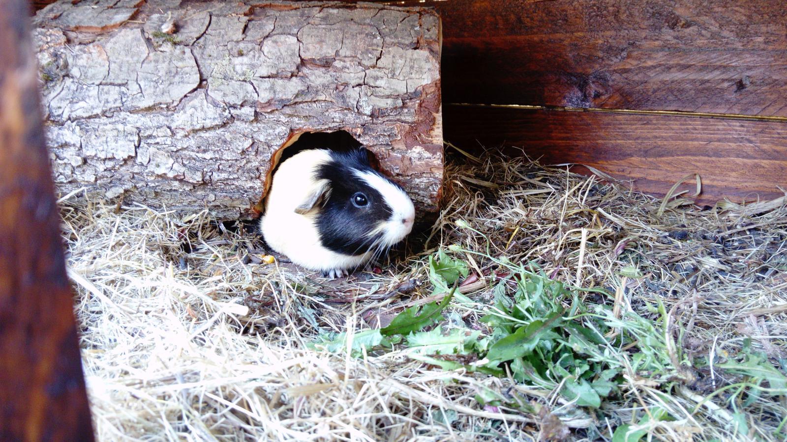 Kralikaren / rabbit hutches - Obrázok č. 18