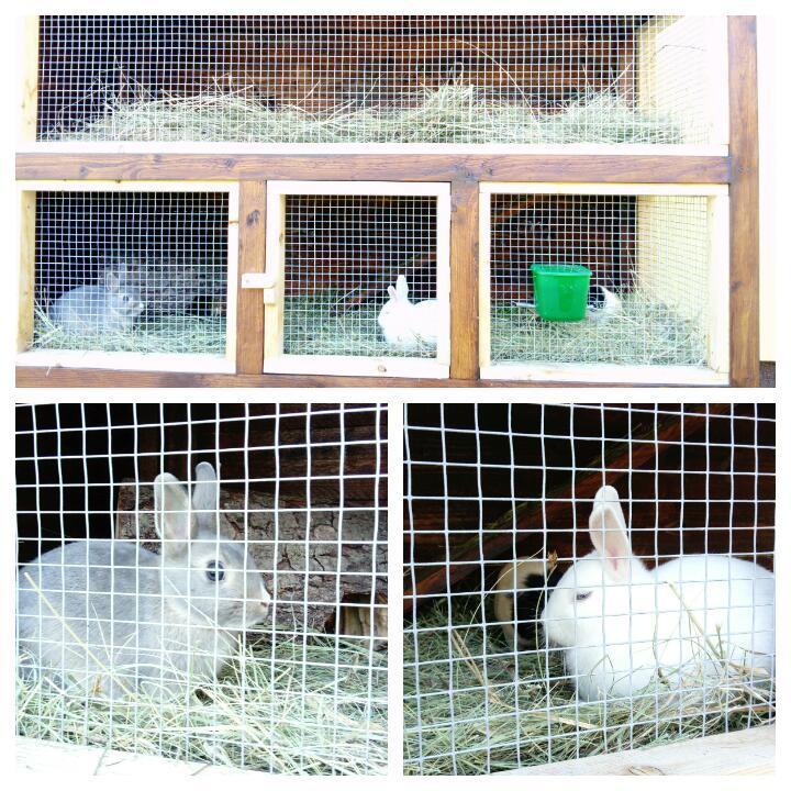 Kralikaren / rabbit hutches - Obrázok č. 19