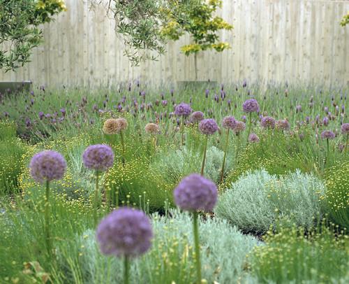 Zelené potěšení - krajka v zahradě