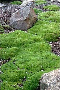 Zelené potěšení - Obrázek č. 56