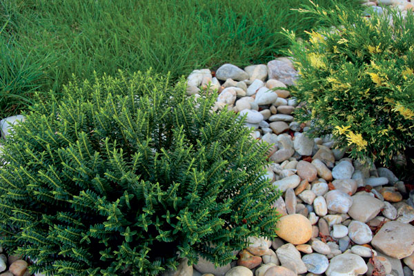 Zahrada - kdo ví, co je to za keřík?